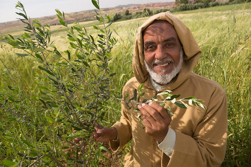 Smallholder farmer Mohamed El Ouafi stands in his wheat and olive sapling field outside Ben Khili, Morocco. As a beneficiary of MCC's Fruit Tree Productivity Project he has received new olive saplings and agricultural training.