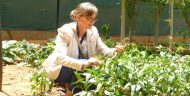 MCC Resident Country Director for Niger Kristin Penn examines a cowpea plant in Niamey. In July 2016, MCC and Niger signed a $437 million compact to bolster the country's agricultural sector, in part, by increasing the regional competitiveness of cowpea and other key agricultural commodities. Photo credit: U.S. Embassy in Niger