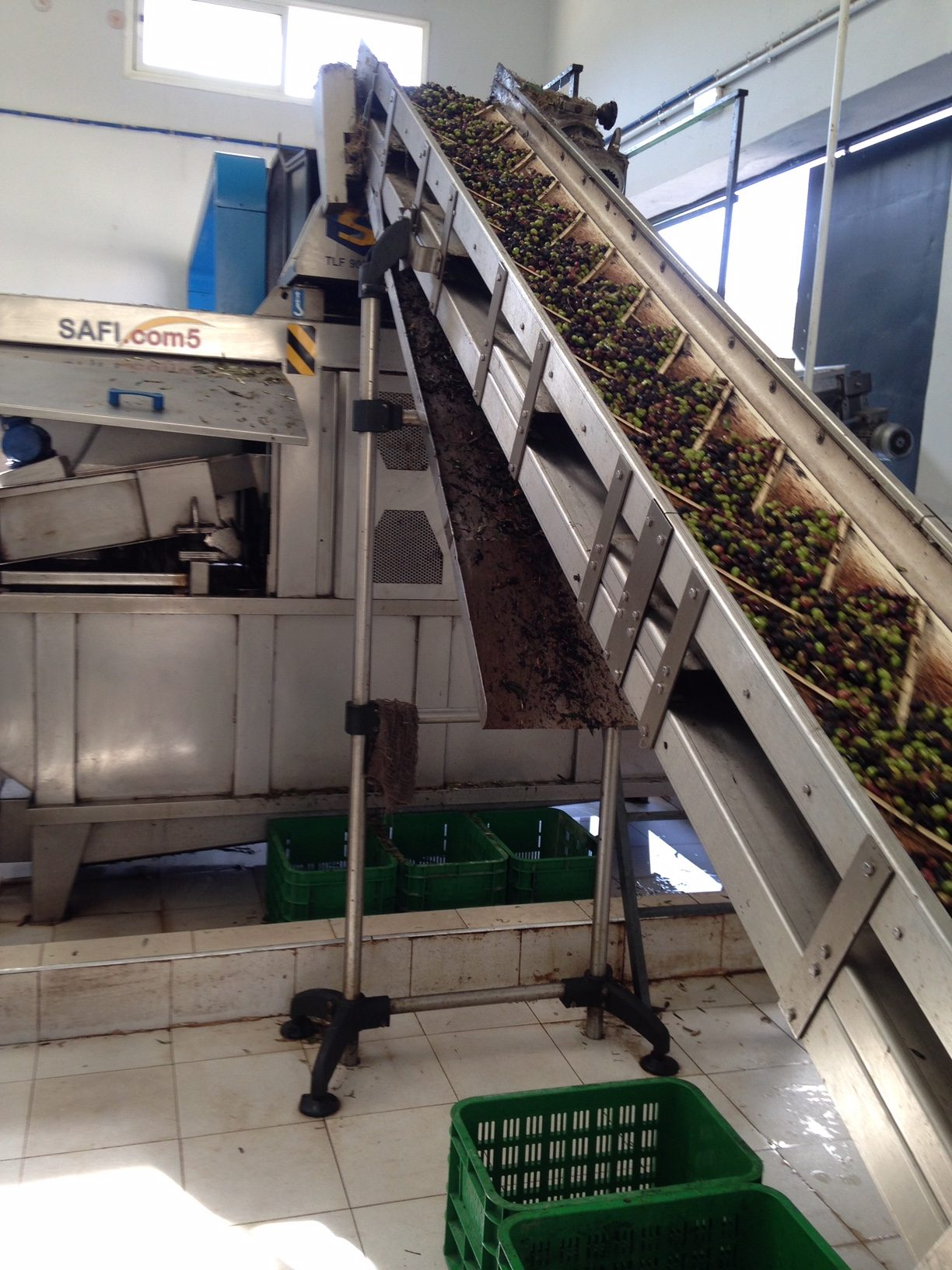Machine crushing olives for processing.