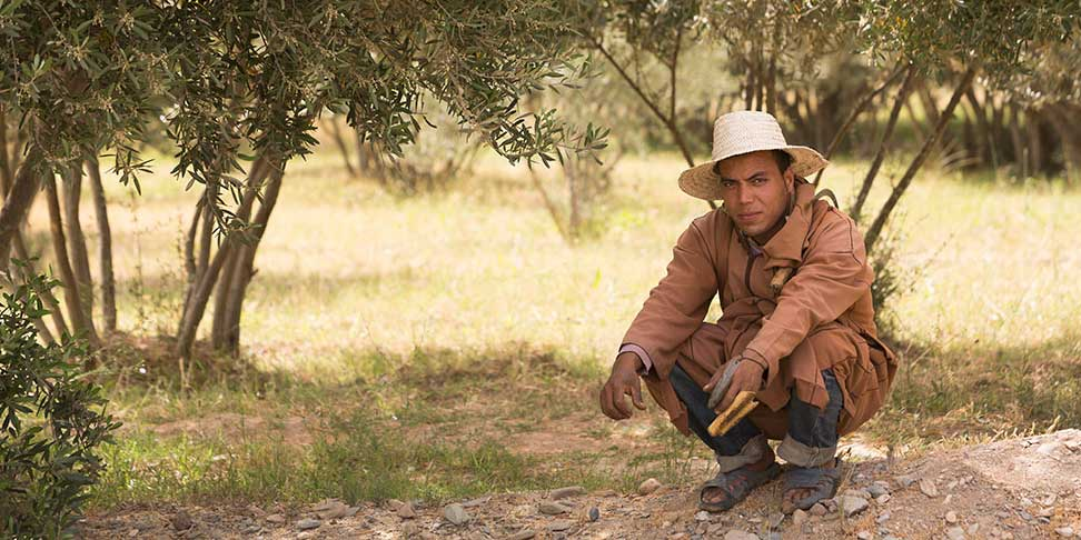 An olive farmer rests in the shade of an olive grove.