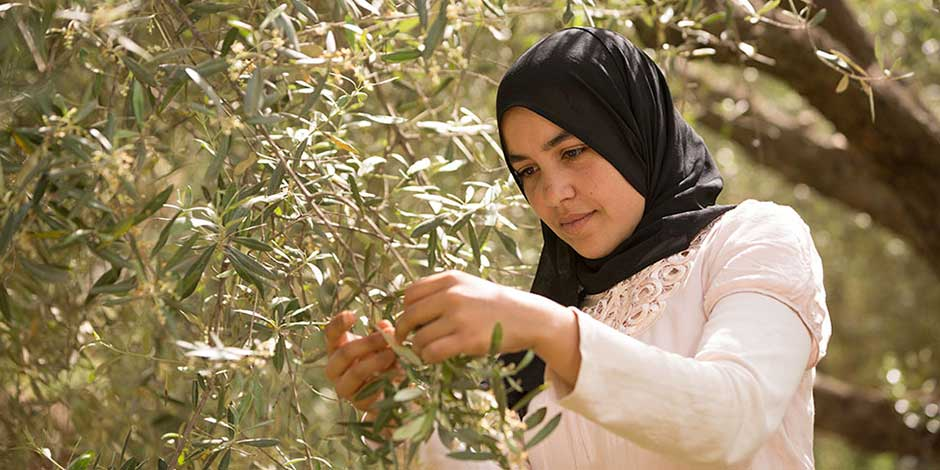 A member of a cooperative who received training on olive tree pruning and harvesting techniques.