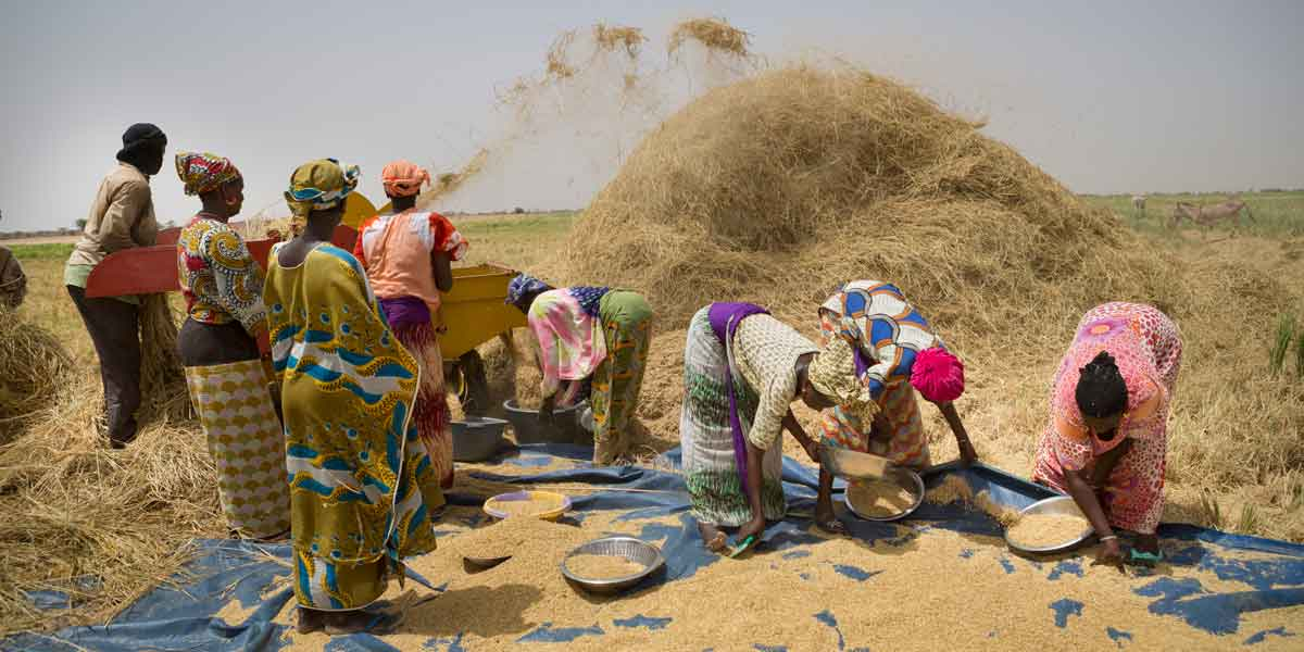Photo: Senegalese women of the Namodiral women's group in Podor Department, northern Senegal, winnow rice in the new irrigated Ngalenka perimeter. The women received land titles for the first time under MCC's Senegal Compact.