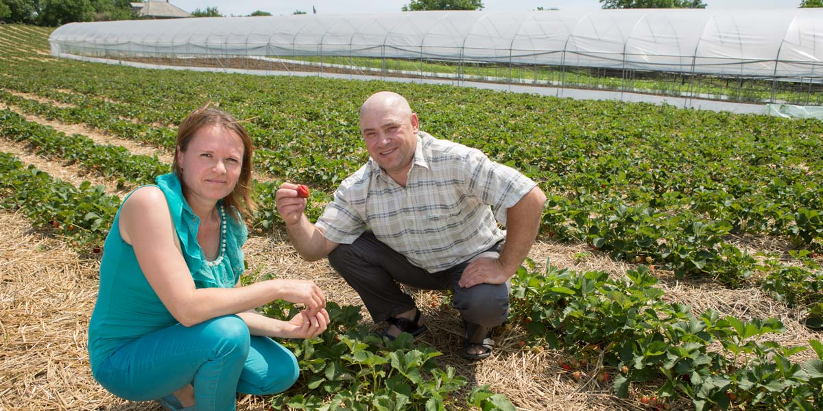 Photo: MCC helped Moldovan farmers like Simion and Elena Tertiuc expand their businesses by providing access to finance for agriculture. The Tertiucs built a greenhouse to supplement their small farm with a loan they secured thanks to MCC's compact with Moldova and planted strawberries and tomatoes.